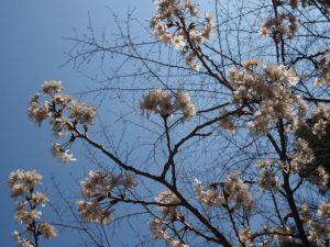 二見神社(姫宮稲荷神社)付近