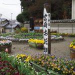 いつも美しく咲き誇る「宮崎お花畑」