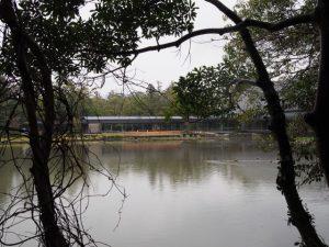 茜社側から望む外宮勾玉池