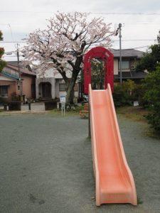 サクラ、的場児童公園(伊勢市船江)