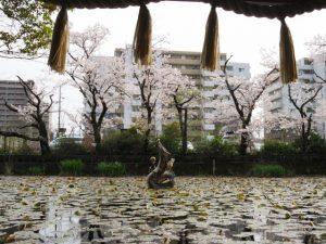 サクラ、朧ヶ池(船江上社)