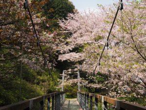 吊り橋にて(音無山)