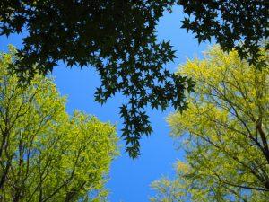 新緑溢れる、須原大社(伊勢市一之木)