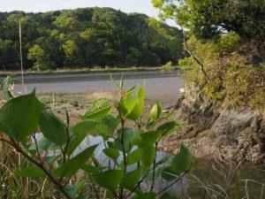 橘橋(五十鈴川派川)を渡った先には・・・