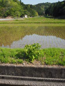 立梅用水(柳谷トンネル2出口〜塔ノ本トンネル入口)の上方側