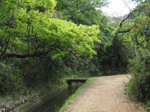 古江隧道出口(立梅用水)へ