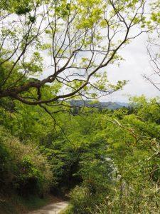 立梅用水(古江隧道出口〜柳谷トンネル1入口)から県道へ