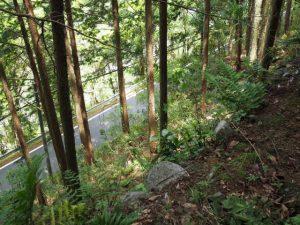 立梅用水、古江隧道に代わられた古水路跡から見下ろした県道