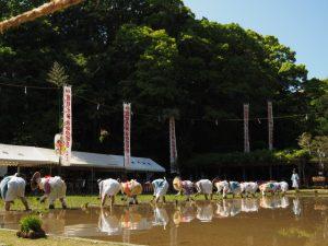 御田祭[おみた](猿田彦神社)2017