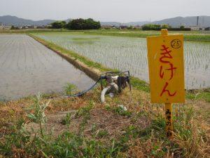 田んぼのダンボ