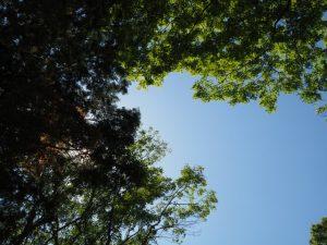 久しぶりに訪れた朝柄八柱神社(多気町朝柄)にてオミアゲ