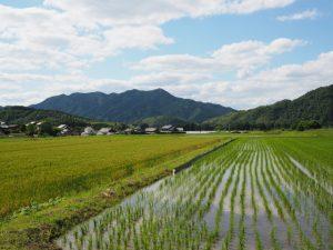 岩谷池へと続く農道からの風景(多気町丹生)