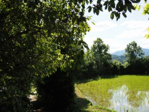 岩谷池付近の田んぼ(多気町丹生)