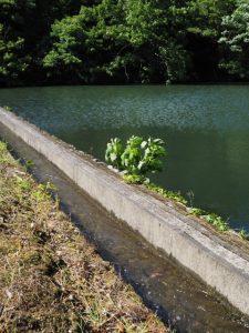 岩谷池に落ちる立梅用水(多気町丹生)