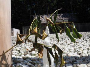 斎庭の鳥居に立てられた榊(神服織機殿神社)