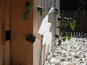 神服織機殿神社に立てられた榊