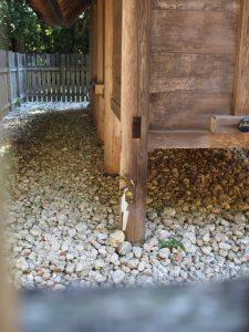 八尋殿(神服織機殿神社)に立てられた榊