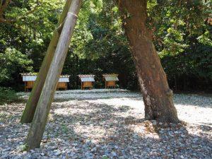 八尋殿の前に立つ梛の木(神麻続機殿神社)