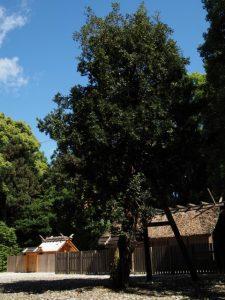 神麻続機殿神社(皇大神宮 所管社)、八尋殿と梛の木