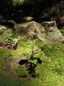 神山一乗寺への東坂(松阪市中万町)