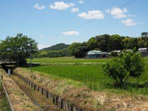 県道701号から遠望した石前神社の社叢(松阪市中万町)