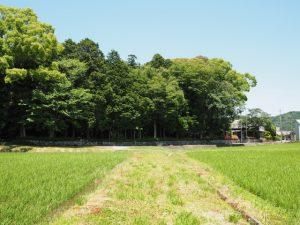 石前神社の社叢遠望(松阪市中万町)
