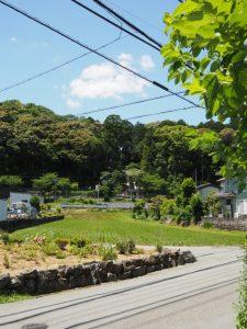 射和東交差点付近からの伊佐和神社の社叢遠望(松阪市射和町