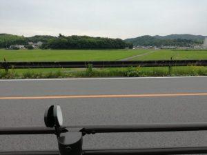 国道167号越しに望む伊雜宮の社叢と御料田