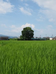 近所の風景