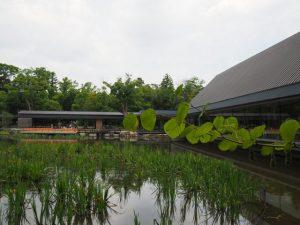 茜社の参道入口付近から望む勾玉池(外宮)