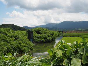 JR参宮線汐合川橋梁方向の遠望
