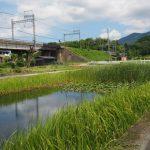 近鉄鳥羽線の高架下付近の池(伊勢市中村町)
