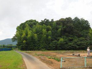 ゲートボール場付近から望む鴨下神社の社叢