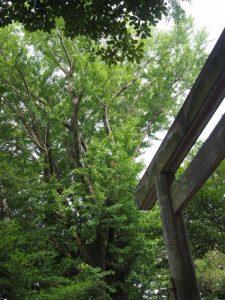 拝殿前で建て替えを待つ鳥居、須原大社(伊勢市一之木)