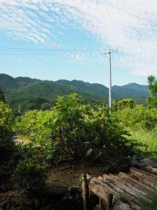 久具都比賣神社(皇大神宮 摂社)付近から望む獅子ヶ岳方向