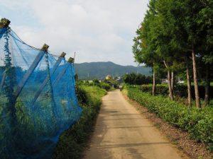 鴨下神社(皇大神宮 末社)付近からの風景