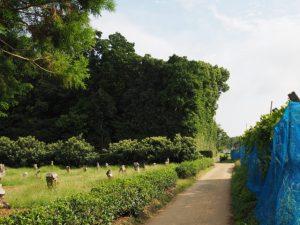 鴨下神社(皇大神宮 末社)の社叢