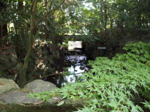 勾玉池からの流れ、豊川へ