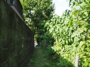 久世戸共同墓地付近から大五輪(おおごり)へと続く小道