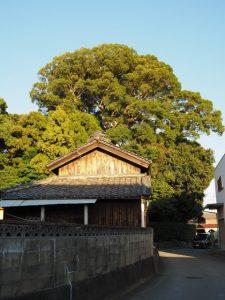 宇須乃野神社(豊受大神宮 摂社)の社叢