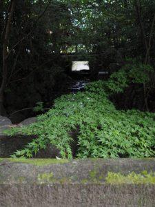 外宮勾玉池からの流れ