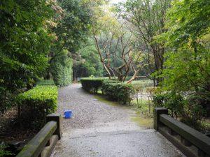 勾玉池の遊歩道へ(茜社の参道より)