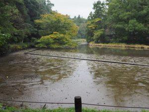 水が拔かれて水位が下がっている勾玉池