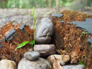 お気に入りの石たち@大津神社(豊受大神宮末社)付近