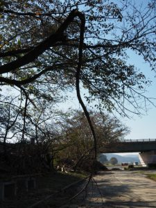 未だ大荒れの宮川堤