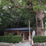 屋根材が張られた建替え中の社務所、御薗神社(伊勢市御薗町王中島)