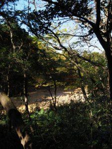 斎王参向古道ウォーク(だんどく池)
