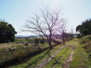 ひささ池と有弐神社跡