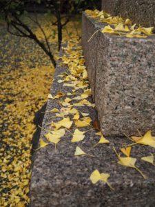 イチョウの絨毯が美しい須原大社(伊勢市一之木)