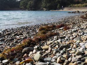 伊射波神社海に面した鳥居前の浜(鳥羽市安楽島町)